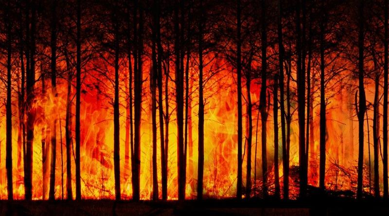 Pożary zombie