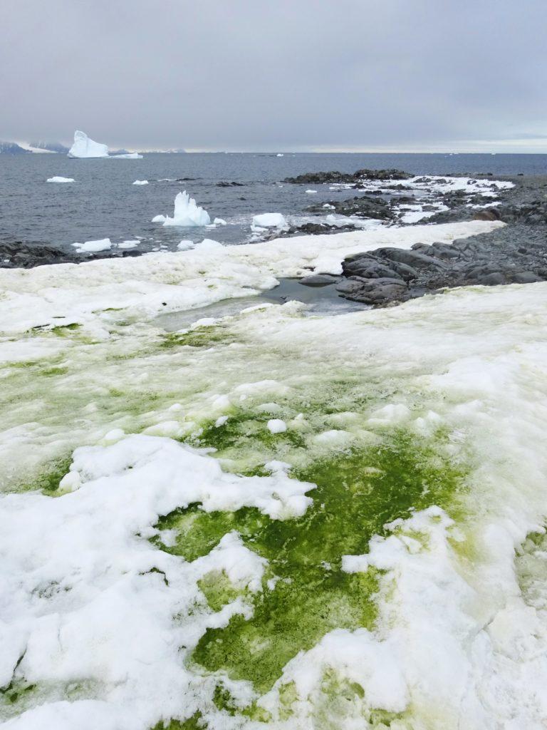 Zielony śnieg