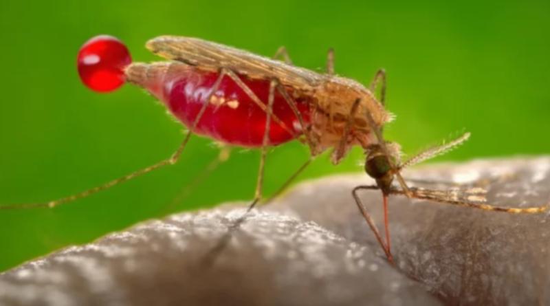 Gdzie się podziały komary w tym roku?