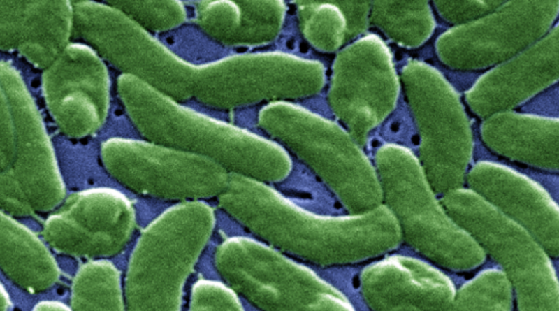 Mięsożerna bakteria