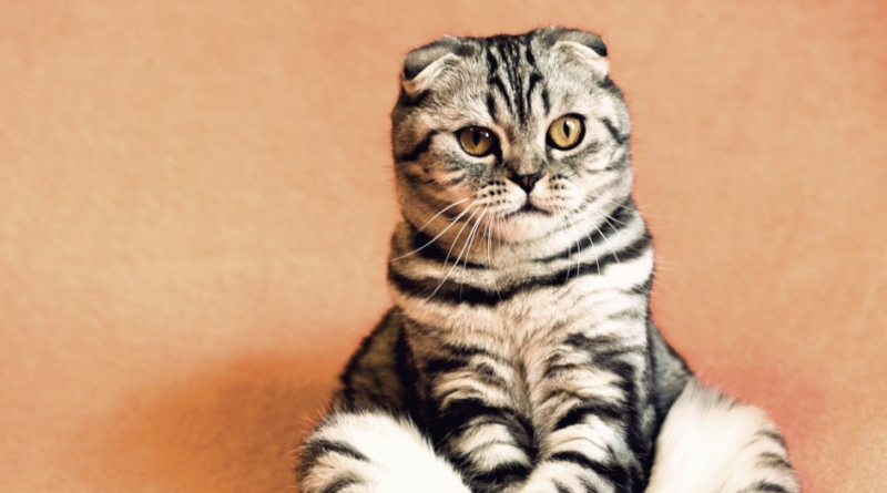 Koci katar - jak leczyć i jakie są objawy?