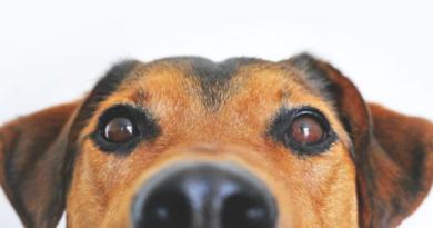 Kiedy zrozumiemy język zwierząt? Wirtualna rzeczywistość pozwoli przetłumaczyć mowę zwierząt