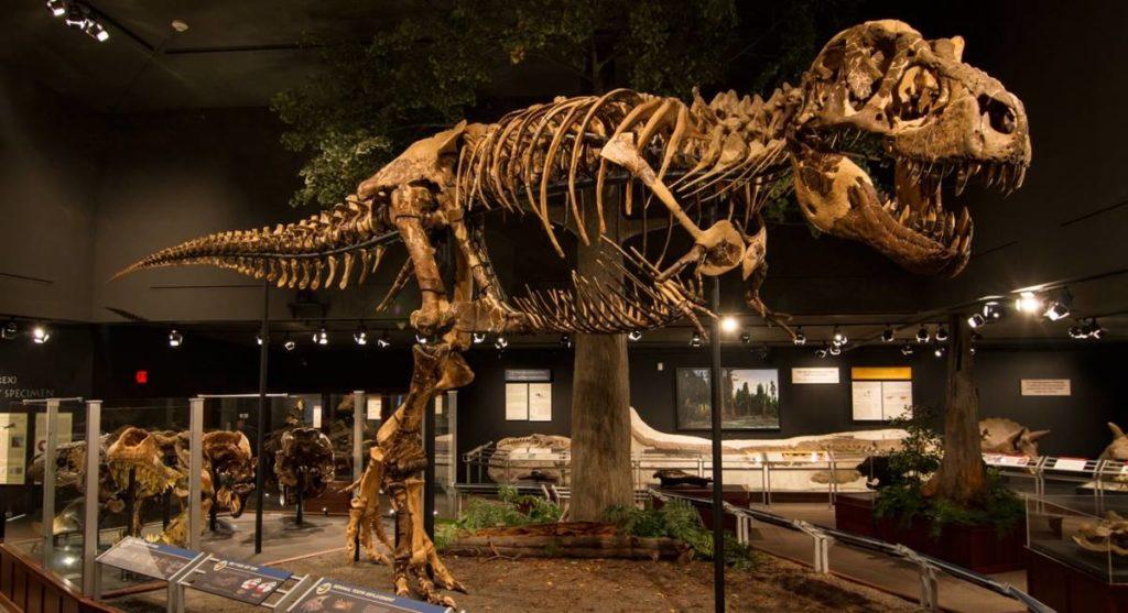Jak wyginęły dinozaury?