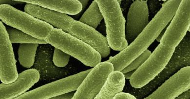Superbakterie zyskują coraz większa odporność na antybiotyki - jakie leczenie stosować?