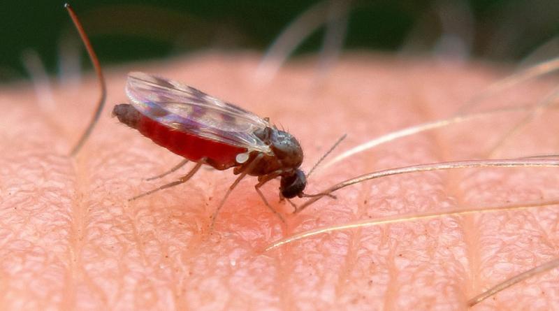 Gorączka Zachodniego Nilu w Europie - nowa epidemia?