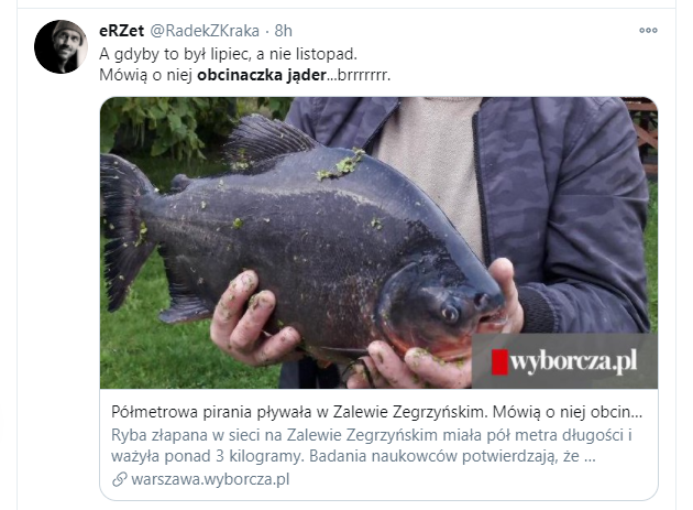 Pirania paku i Zalew Zegrzyński - czy obcinaczka jąder to groźna ryba?