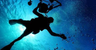 Osa morska zabiła nastolatka. Najbardziej jadowita meduza na świecie