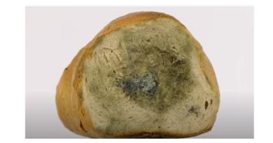 Pleśń na chlebie - czy zjedzenie pleśni i pieczywa z nalotem jest szkodliwe?