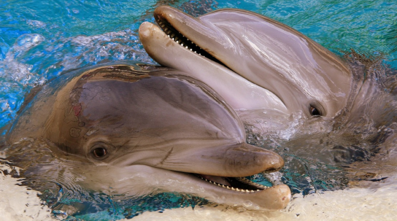 Masowe zabijanie delfinów na Wyspach Owczych. Rzeź zgodnie z prawem i tradycją. Delfin jako krwawa zabawka do mordowania