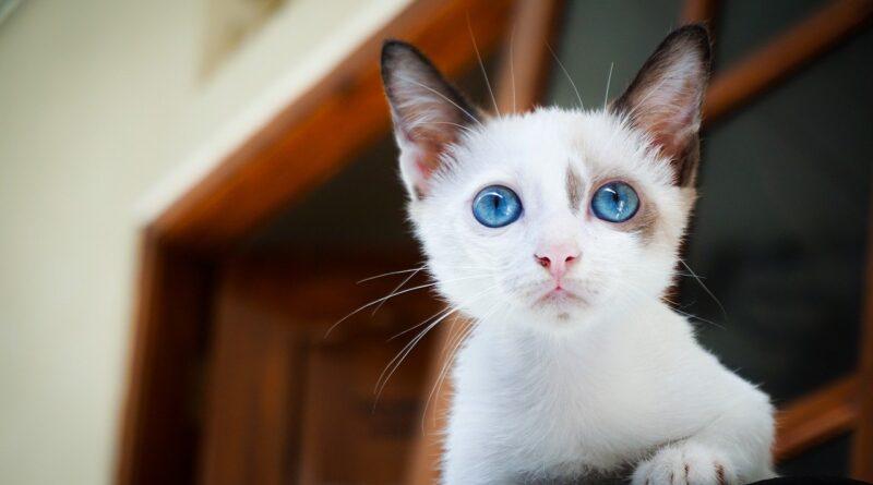Koty - zaskakujące ciekawostki i informacje